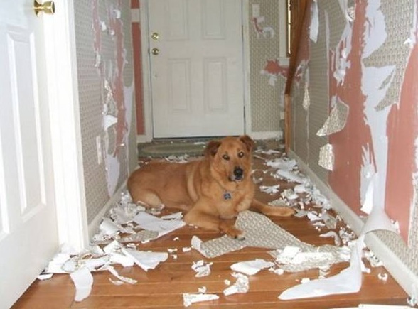 redecorate, dogs, pets, crazy, animals