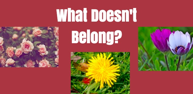 belong, images, pick out the image, education