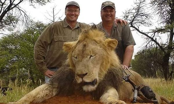 Cecil the Lion, animals