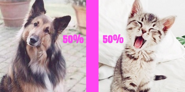 cat, Dog, personality