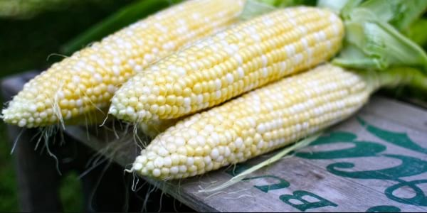 sweet white corn, food & drinks
