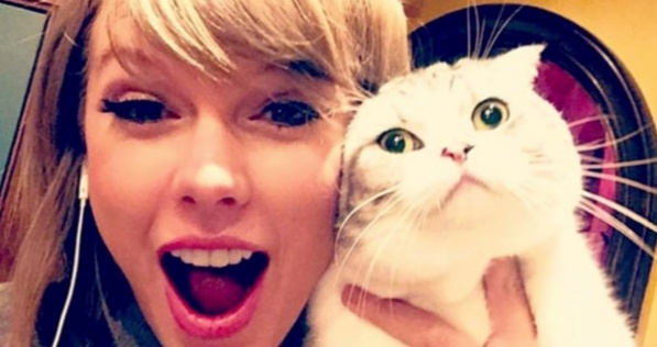 Taylor Swift, Cats, celebs, animals, pop culture