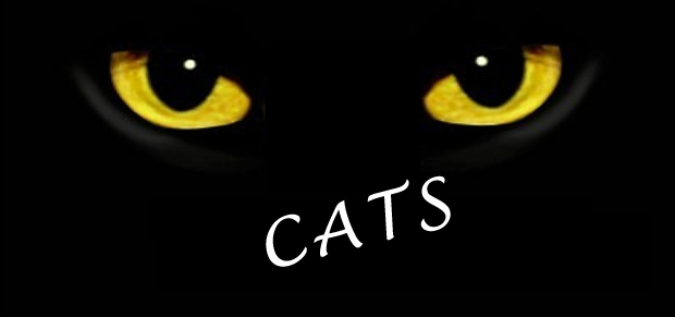 Cats, musical