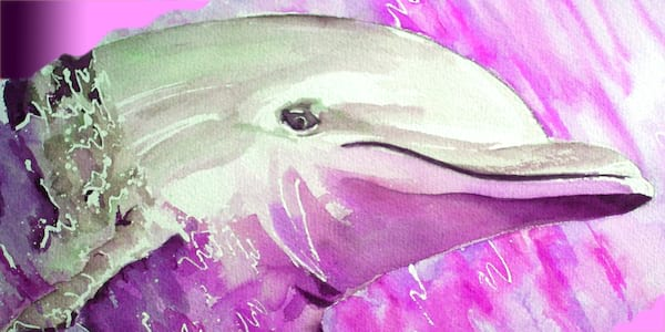 dolphin, pink dolphin