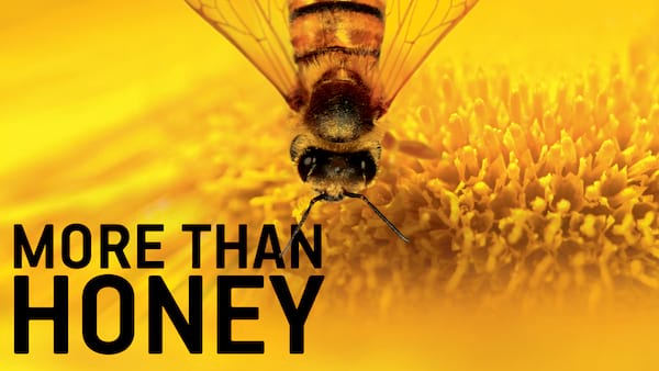 bees, Netflix, environmental documentary, More than Honey, movies/tv, culture