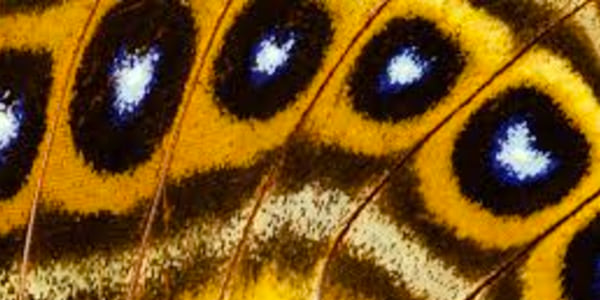 close up, butterfly