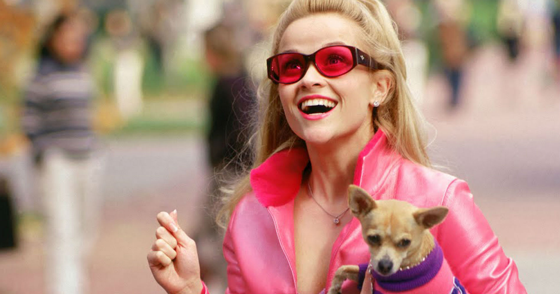 legally blonde, reese witherspoon, Dog, chihuahua