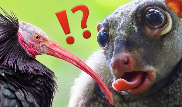 Quiz-Only-4-percent-Of-People-Can-Name-Every-Single-One-Of-These-Obscure-Animals