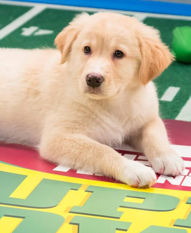 What time does the Puppy Bowl 2018 start, lineup