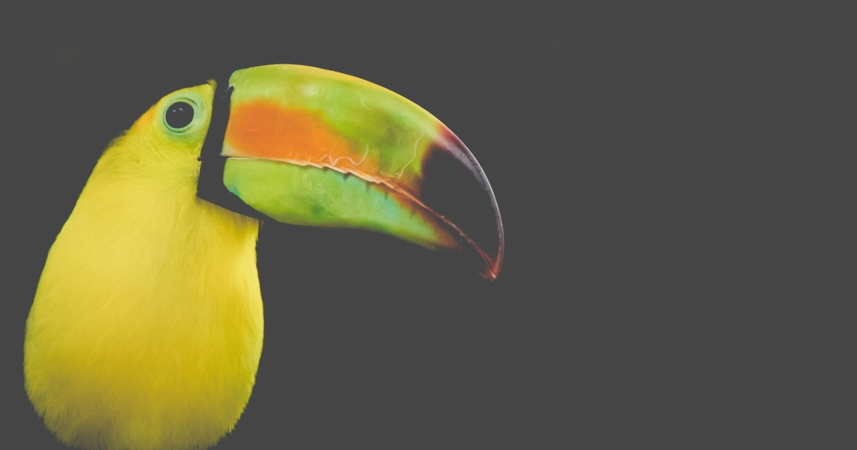 Close-up of a Keel-Billed Toucan, animals