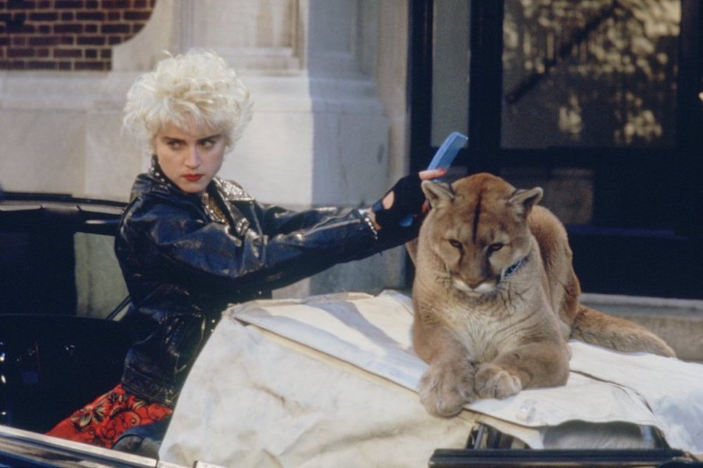 movies, whos that girl, madonna