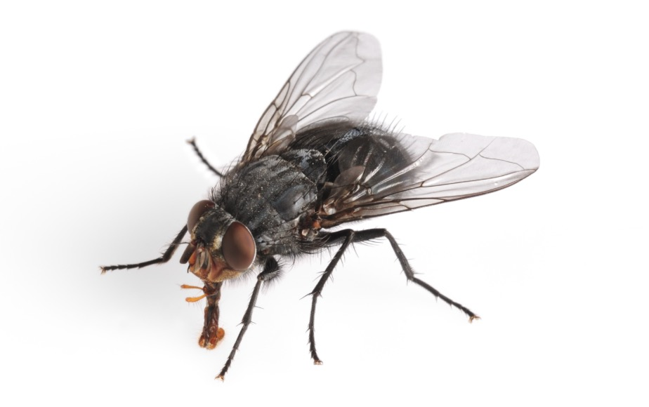 insect, bug