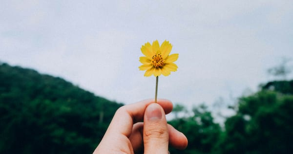 close up of a man holding a single yellow flower and the foreground is an overcast forest
