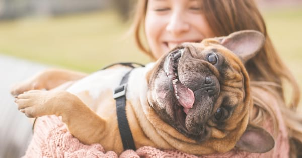Girl holding a French bulldog while he lays in her arms and makes a funny tongue out face