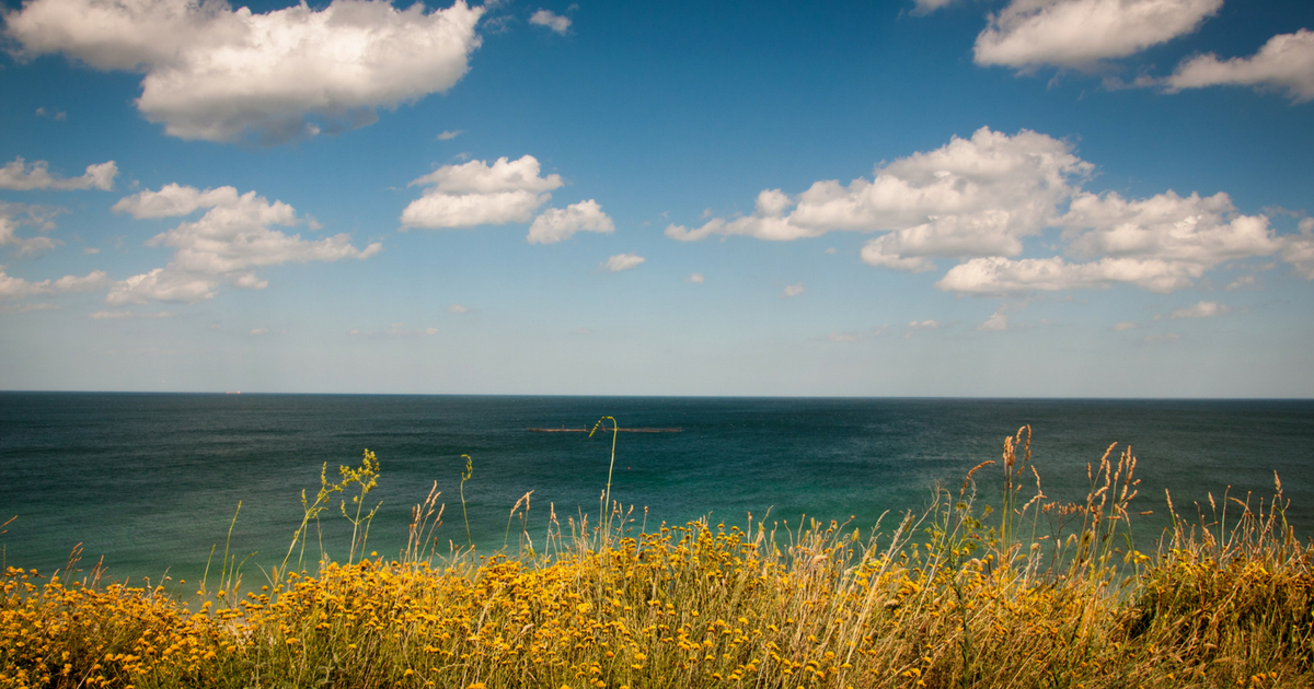 a yellow field looking over to a blue ocean