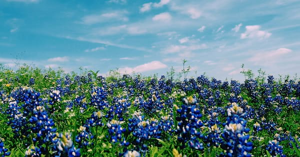 texas, instagram, captions, quotes, puns, funny, austin, Houston, Dallas, girl in field, flowers