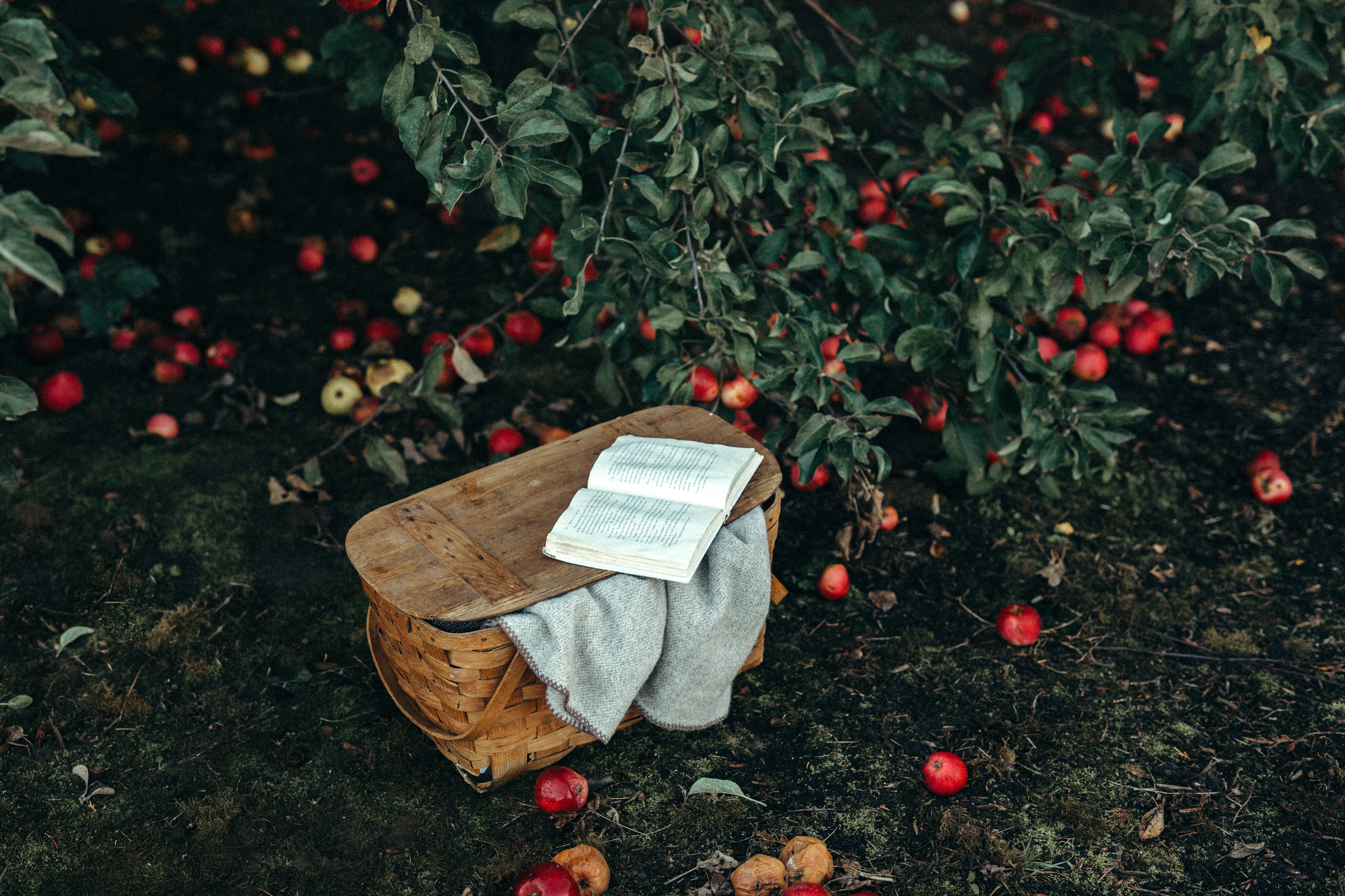 picnic basket with a book and blanket surrounded by apple trees