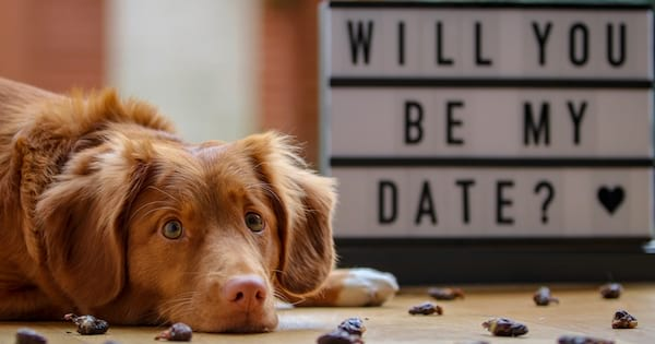 Dog lying on the ground next to a sign that reads, science & tech, relationships, will you be my date, wedding date instagram captions