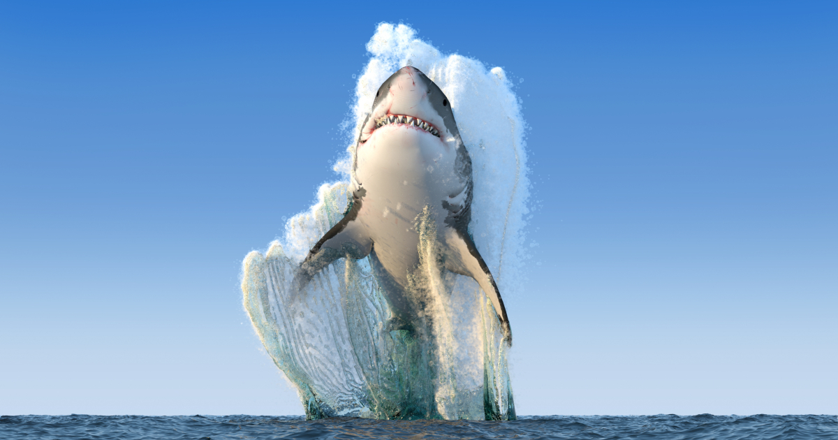 Great White shark jumps out of the water