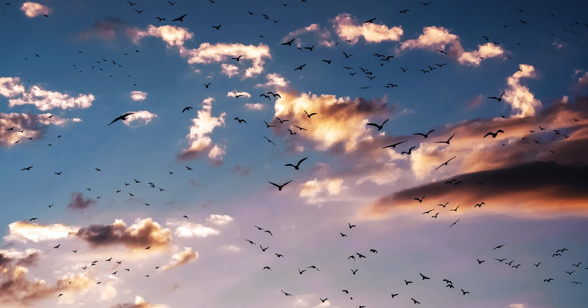 Photo of many birds flying through the sky. The clouds in the background are being hit with light., science & tech