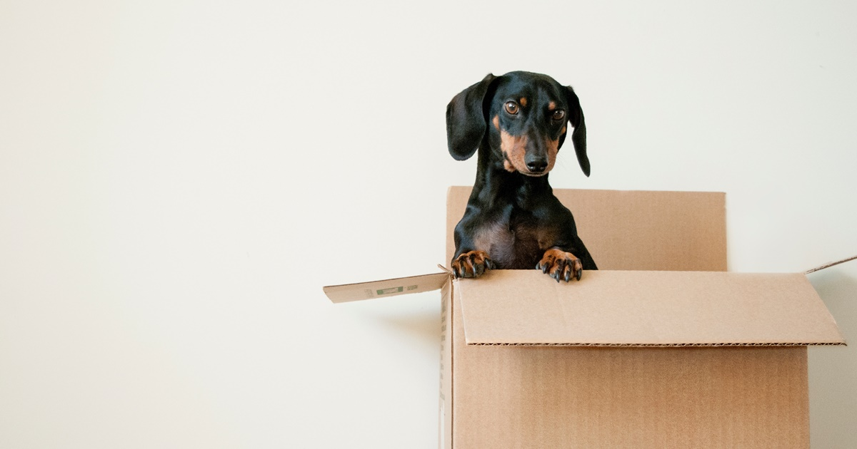 Small dog sitting in box., science & tech, travel