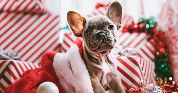Christmas Instagram captions, a puppy sitting inside a Santa hat with Christmas gifts in the background, culture