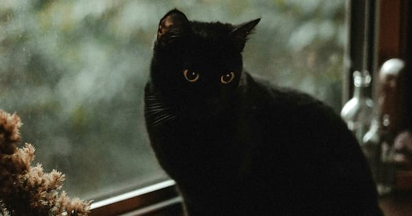 Black Cat Instagram Captions, closeup of a black cat with green eyes, animals