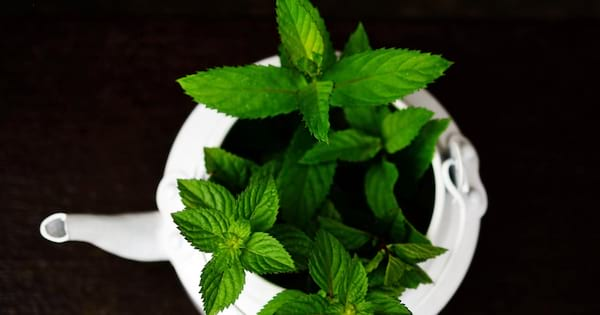 The Best Teas For Seasonal Depression, peppermint resting inside a white teapot, health, food & drinks