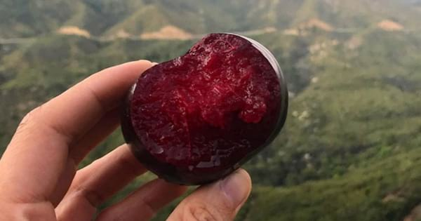 Person holding a plum that has been bitten into