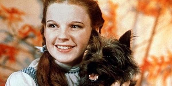 the wizard of oz, Dog, movies