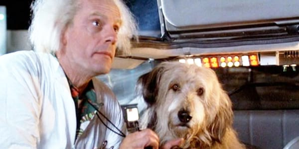 Dog, movies, back to the future