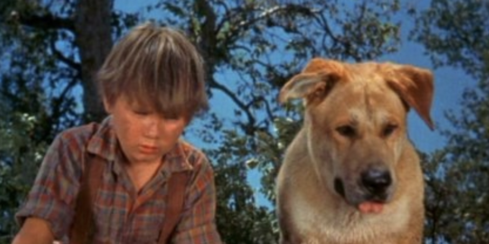 old yeller, movies