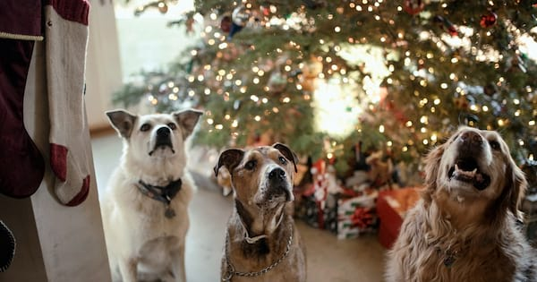 Gifts For Your Pets, three dogs standing in front of a Christmas tree, animals