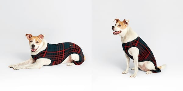 Gifts For Your Pet, two photos of a small dog wearing plaid pajamas, animals