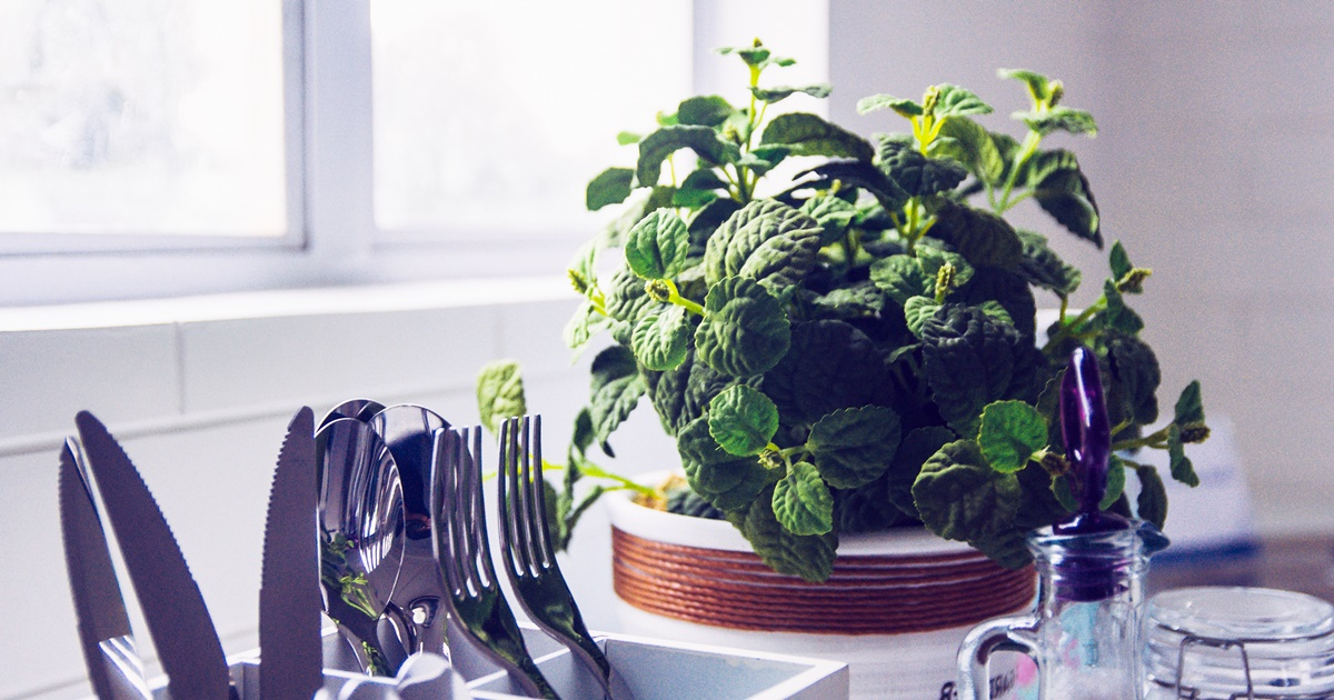 Benefits of Mint, a potted mint plant sitting in a kitchen, food & drinks, health