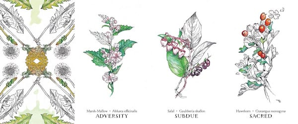 Oracle Decks For Beginners, four images of the Hedgewitch Botanical Oracle, culture