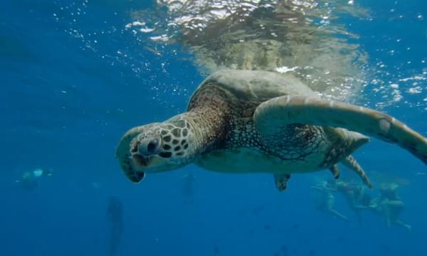 Two-Hour Turtle Canyon Snorkel Tour from Groupon
