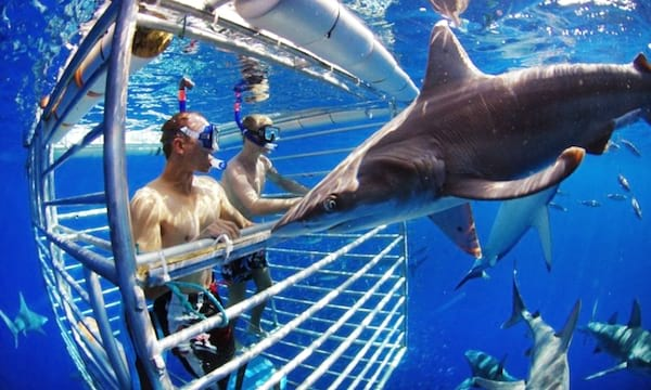 Shark cage diving adventure from Groupon