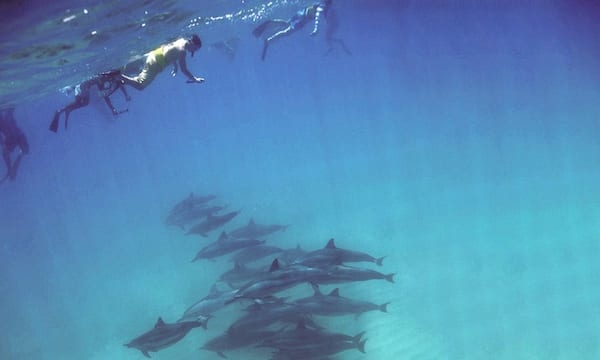 Dolphin Snorkeling and whale watching tour from Groupon