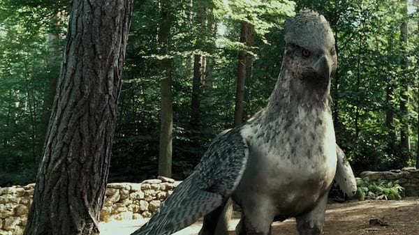 hippogriff, Buckbeak, harry potter and the prisoner of azkaban, harry potter