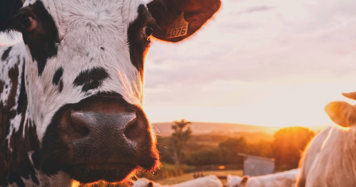 why is dairy bad for your skin