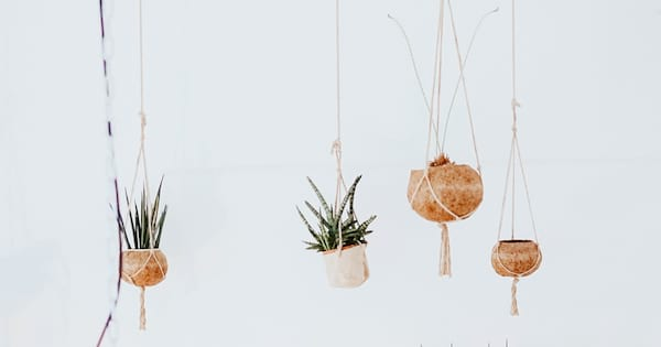home, image of four hanging basket plants, Makeover Your Home With House Plants