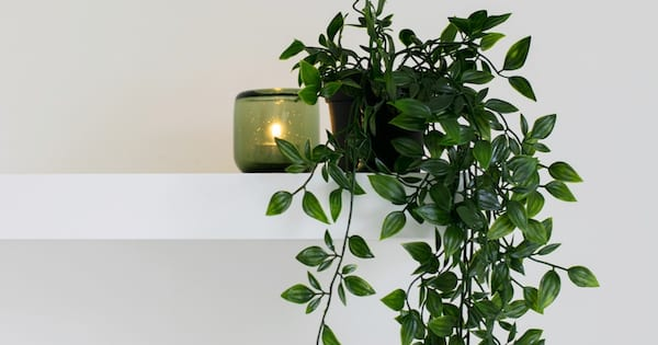 home, image of an ivy hanging down from a shelf, Makeover Your Home With House Plants
