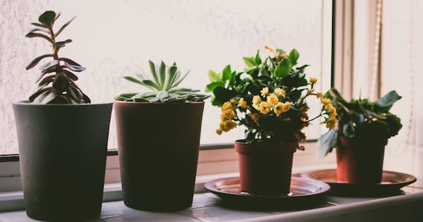 home, image of four small plants sitting in a windowsill, Makeover Your Home With House Plants