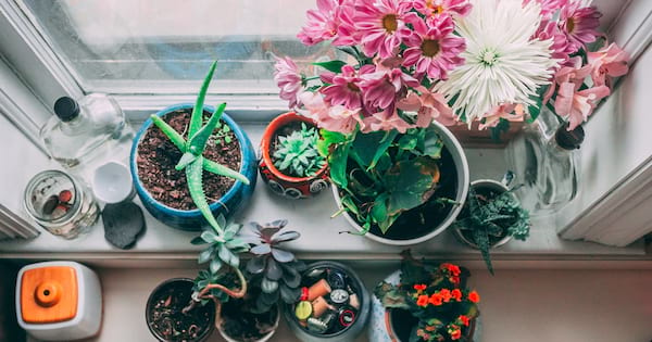 home, photo take from above of various plants sitting in a windowsill, Makeover Your Home With House Plants