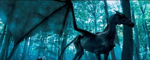 harry potter, movies, order of the phoenix, Thestral, 2005