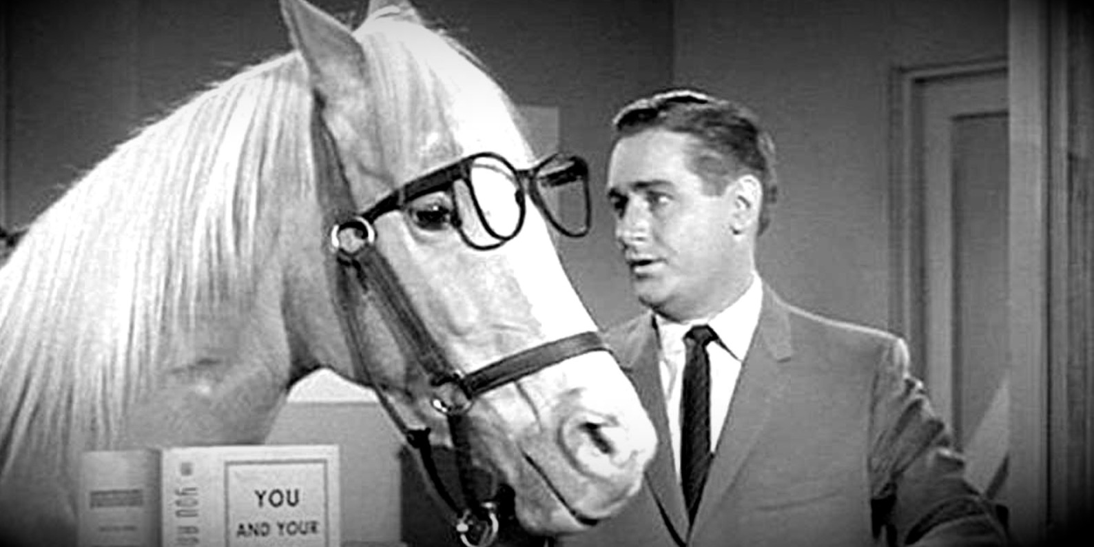mister ed, 60s tv show main character, tv