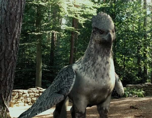 hippogriff, harry potter
