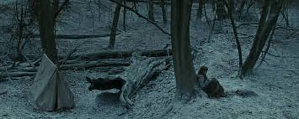 harry potter, movies, Forest of Dean