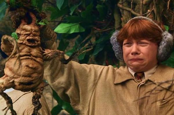 Hogwarts Quiz Can You Pass Herbology 101 Quiz Bliss Com